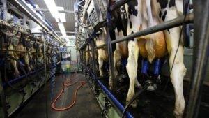 O SINFA MA apoia o consumo de leite valorização dos produtores rurais